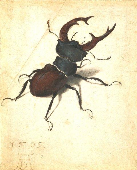 Hirschkäfer (Albrecht Dürer, 1505)