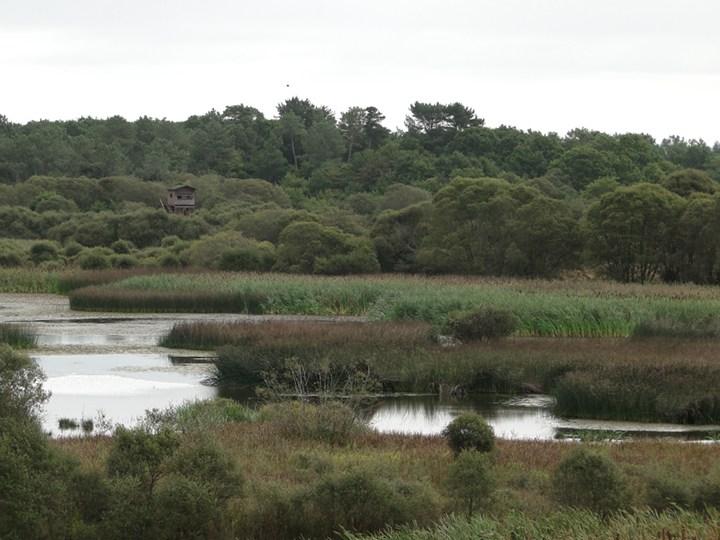 Lagoa de Cospeito  As zonas húmidas tenhem efeitos muito positivos. Mas como os economistas nom os sabem medir, nom os tenhem em conta.