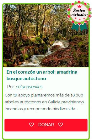 En el corazón un árbol. Amadrina #oTeuBosque