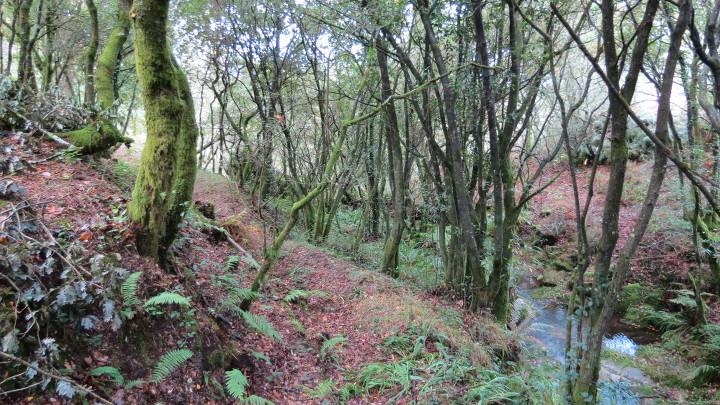 Bosque de Frojám