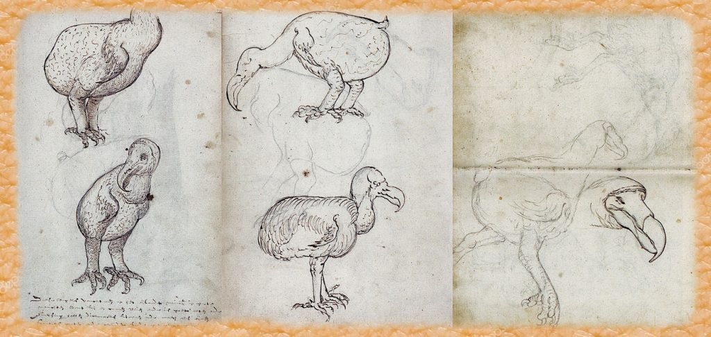 Dibujos del dodo