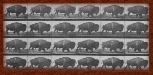 Fotogramas bisonte