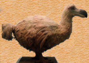 Reconstrucción de un supuesto dodo