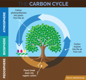 The carbon cycle biosphere
