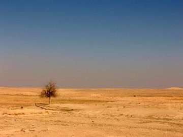 Desierto sirio