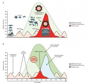 Importancia clínica de la ecología de la enfermedad (A) La transmisión de la infección y la amplificación en las personas (rojo brillante) se produce después de que un patógeno procedente de animales salvajes (rosa) se traslade al ganado para causar un brote (verde claro) que amplifica la capacidad de transmisión del patógeno a las personas. (B) Los esfuerzos de detección y control tempranos reducen la incidencia de la enfermedad en las personas (azul claro) y en los animales (verde oscuro). Las flechas de desbordamiento muestran la transmisión entre especies.1